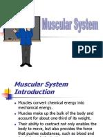 Sistem Otot Muskular 2 (Muscular System)