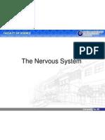 Sistem Saraf (Nervous System)