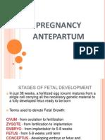 Maternal II