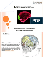 Lóbulo occipital violeta