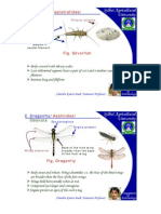 How to Identify Insects Part One