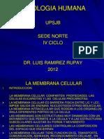 clase fisiologia membrana celular 1º CLASE