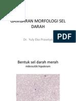 Gambaran Morfologi Sel Darah