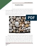 Foraminifera Bentos