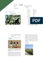 Fisiología del cultivo de Palto