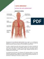 aneurisma - fracturas