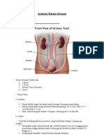 Anatomi Sistem Urinaria (2)