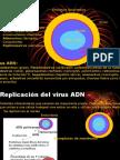 Clase de Virus