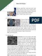 Bakteri Dan Perannya