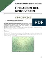 Micro Vibrionaceae