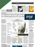 Estudiosos buscan que mejore la calidad genética de las alpacas
