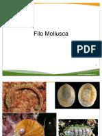 Filo Mollusca - aula