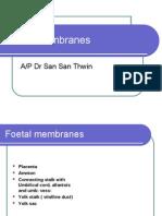 Foetal Membranes