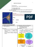 Pn Module - Nervous System