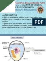 Pract. # 4 Inoculacion Virus en Huevo Embrionado