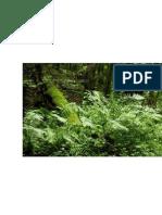 Bosque Que Cura