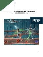 Guía N6 Neurona Estru y Función