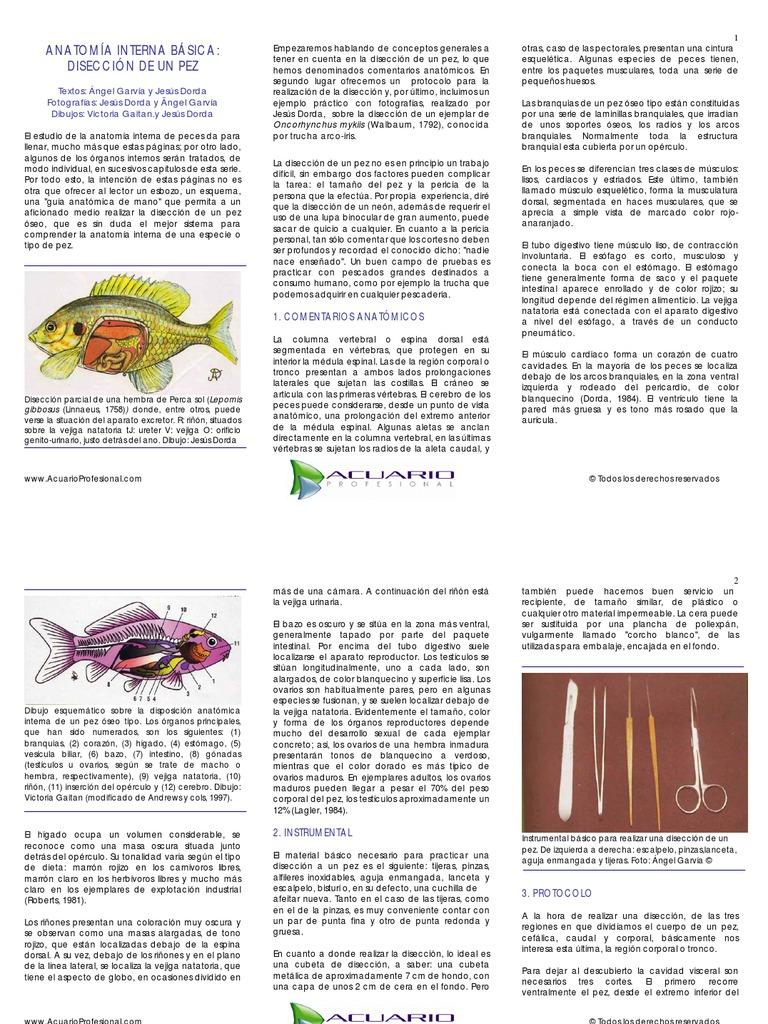 anatomia interna basica diseccion de un pez