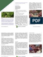 crustaceos decapodos acuario marino 1