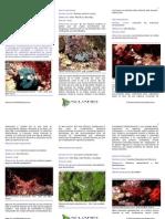 crustaceos decapodos acuario marino 2