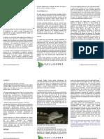longevidad de invertebrados peces, anfibios y reptiles