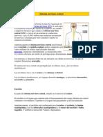 Sistema Nervioso Central Para Estudio 1