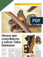 Monos Que en a Salver Vidas Humanas