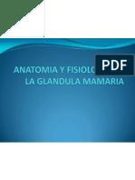 anatomiayfisiologiadelaglandulamamaria-091212185329-phpapp02