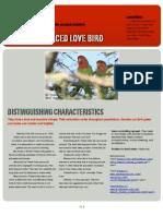 1.brinkpeachfacedlovebird