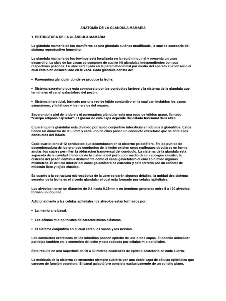 Único Ubre De Vaca Anatomía Festooning - Imágenes de Anatomía Humana ...