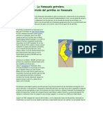Caracteristicas de La Venezuela Petrolera