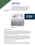 Proses Pembentukan Urin