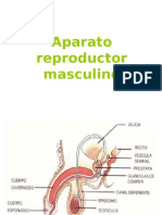 Aparato Re Product Or Masculino-PARTES