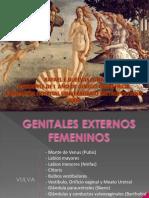 GENITALES EXTERNOS FEMENINOS