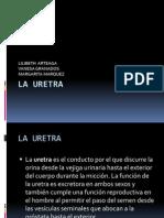 Procedmientos Quirurgicos en Uretra b