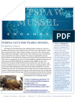 Purple Cat's Paw Pearly Mussel
