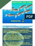 ZEBRAFISH [modalità compatibilità]