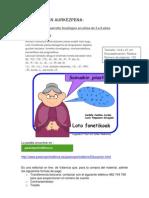 loto_fonetikoak