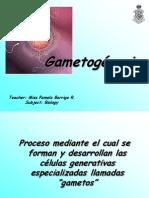 gametognesis-100602174521-phpapp01