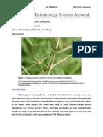 BIOL 2266- Species Account Erythemis Plebeja.