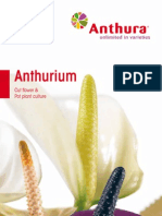 Anthurium Catalogue