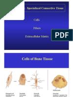 Bone Tissues 1