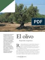 propiedades olivo