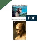 Tugas Sejarah Manusia Purba