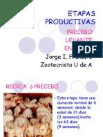ETAPAS PRODUCTIVAS (2)