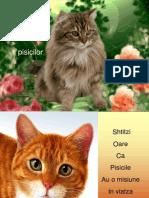 Pisicile-ia