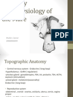 Anatomy and Physiology of the Mare
