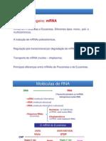 Aula_RNA