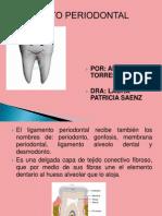 Anayansi - Ligamento Periodontal