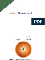 biomoleculas I clase 1